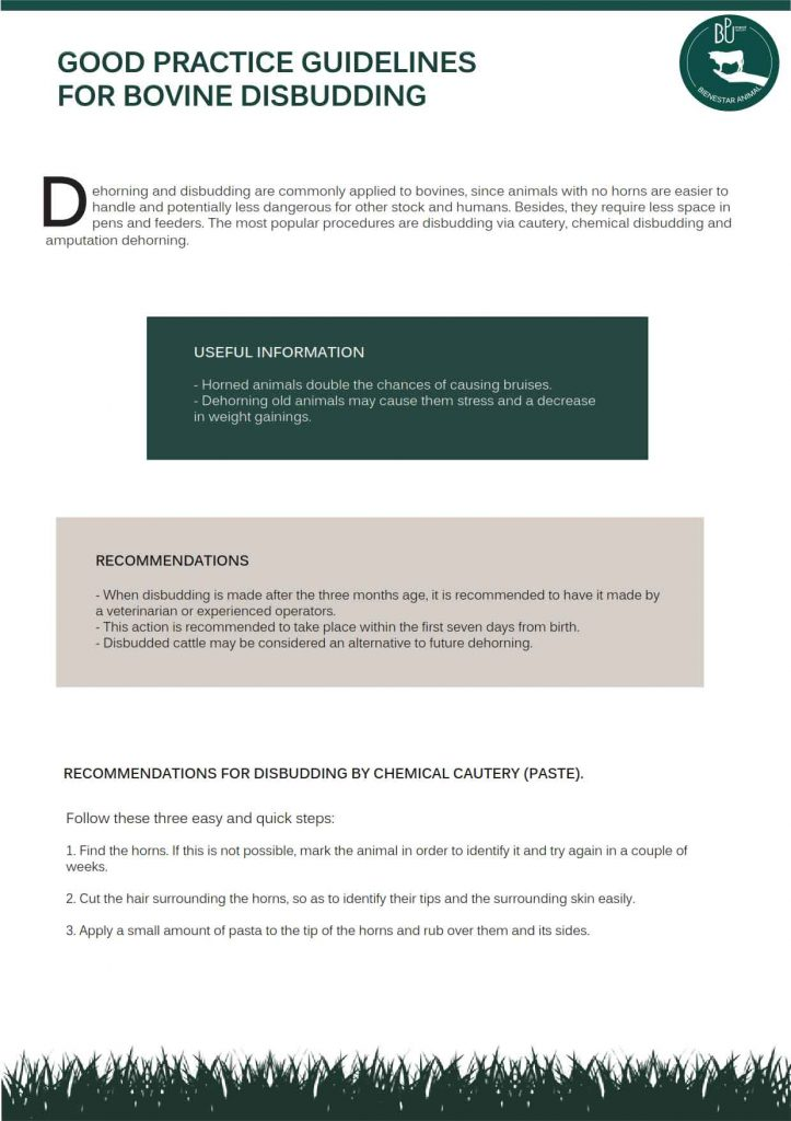 Disbudding-Guidelines_001